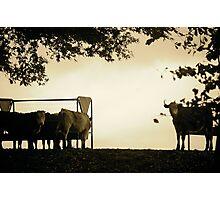 East Devon Rural ... 61 Photographic Print