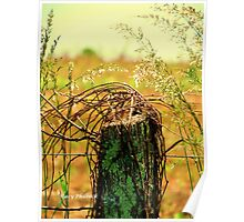Country Road Fence Post Poster