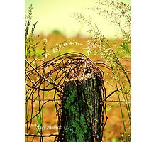 Country Road Fence Post Photographic Print