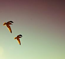 Fly Away Home by LWoodPhoto