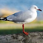 seagull by gmws