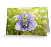 Vilot Flower Greeting Card