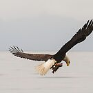 Eagle with Rockfish by dbvirago
