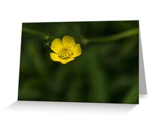 Wild flower 1 Greeting Card