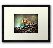Tawny Emperor  Framed Print