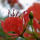 Rain Petals by dez7