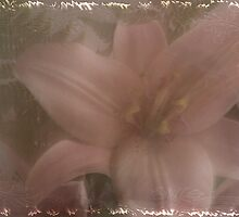 Mothers Lily  by Sandra Foster