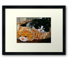 Now This Is A Cat Bed! Framed Print