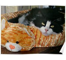 Now This Is A Cat Bed! Poster