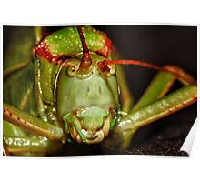 Grasshopper? up close Poster