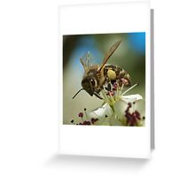 Pollen for my Queen  Greeting Card