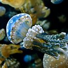 Mushroom Jellyfish III by Diego  Re