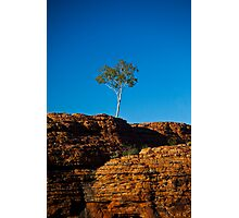 One tree Rock Photographic Print