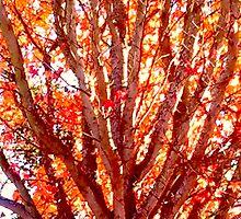 Late Autumn Color 2 by kahoutek24