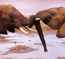 Elephant love by Karue