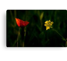 Red or Yellow? Canvas Print