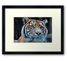 You've got my attention... Framed Print