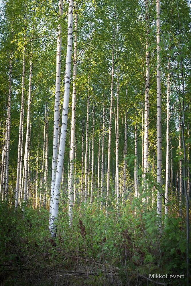 Birch Forest I by MikkoEevert