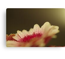 Weeping White Canvas Print