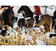 Horse and hounds 3 Photographic Print