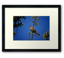 Singing his heart out Framed Print