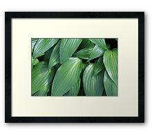 Leaves Framed Print