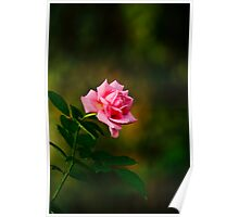 A rose for you! Poster