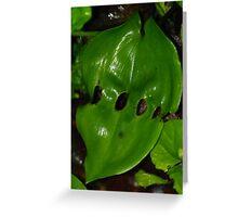 Leaf Lattic Greeting Card