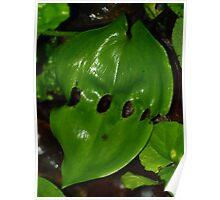 Leaf Lattic Poster