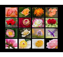 A Day in the Garden - Black Background Photographic Print
