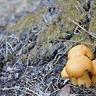 Magic Mushrooms by squidypoo