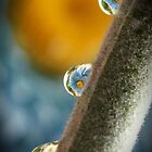 Flower drops by Cassy Randle