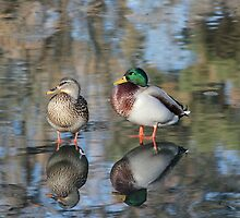 Mr and Mrs Mallard by Rosanne Jordan