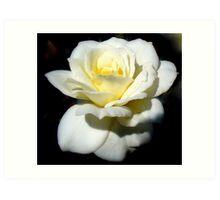 Vanilla Rose Art Print