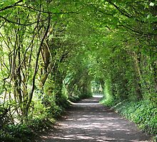 The Ireland Series-The green tunnel by Brandi  Reynolds