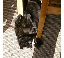 Hamish Sunbathing Photographic Print