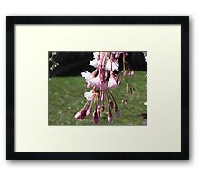 DANGLING PINK BLOSSOMS Framed Print
