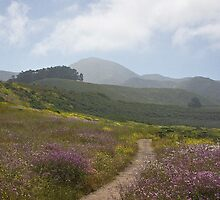 path to the mountain- Montana de Oro by David Chesluk
