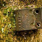 Tree Stump by cyasick