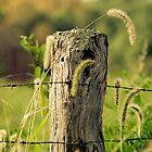 Fence Post by cyasick