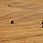 Golden Bales by Lynnette Peizer