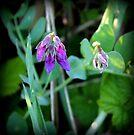 wild flowers by karolina
