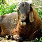 Papa Goat     ^ by ctheworld