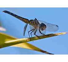 Safe Landing Photographic Print