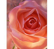 *** CHEERFUL PINK ROSE *** Photographic Print