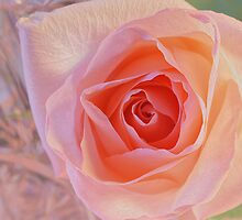 ***  JOYFUL DELIGHT ~ PINK ROSE  *** by JETAdamson