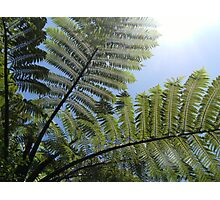 Ferns Across a Blue Sky Photographic Print