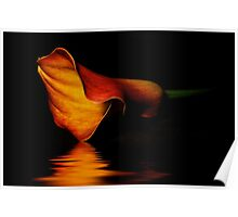 Calla Lilly Poster