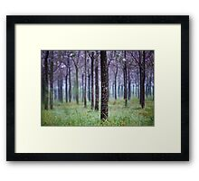 lines of trees  Framed Print