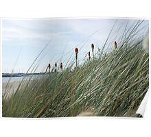 Beach Scenes Poster